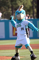 Chauncey the Chanticleer #29, Mascot of the Coastal Carolina University Chanticleers throwing out the first pitch before a game against the Boston College Eagles at Watson Stadium at Vrooman Field in Conway, South Carolina on February 18, 2011. Photo by Robert Gurganus/Four Seam Images