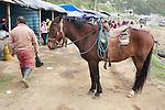 Horse, Otovalo Market