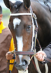 09 May 16: Rachel Alexandra is walked into the paddock before winning the 134th running of the grade 1 Preakness Stakes for three year olds at Pimlico Race Track in Baltimore, Maryland.
