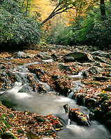 Fall color on the Little Pigeon River; Great Smoky Mountains National Park, TN