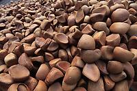 A andiroba (Carapa guianensis, também chamada de Karaba ou Crabwood) é uma árvore alta, frondosa, bonita, de folhas alongadas, com pequeninas flores brancas. É característica da região amazônica e dos solos úmidos de toda a região em especial no Amapá, Acre e Pará.