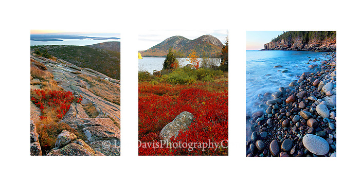 Acadia Collage 2