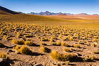 Chile Area close to El Tatio geyser field