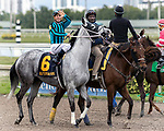 HALLANDALE BEACH, FL - JAN 20:Daddy,s Boo #6 with Javier Castellano on board for trainer Larry Rivelli prepares to run the $150,000 Sunshine Millions Filly and Mare Turf Stakes at Gulfstream Park on January 20, 2018 in Hallandale Beach, Florida. (Photo by Bob Aaron/Eclipse Sportswire/Getty Images)