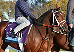 Rombauer, trained by trainer Michael W. McCarthy, exercises in preparation for the Breeders' Cup Juvenile at Keeneland Racetrack in Lexington, Kentucky on November 3, 2020.