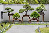 Yangzhou, Jiangsu, China.  Bonsai Trees, Bonsai Garden, Slender West Lake Park.