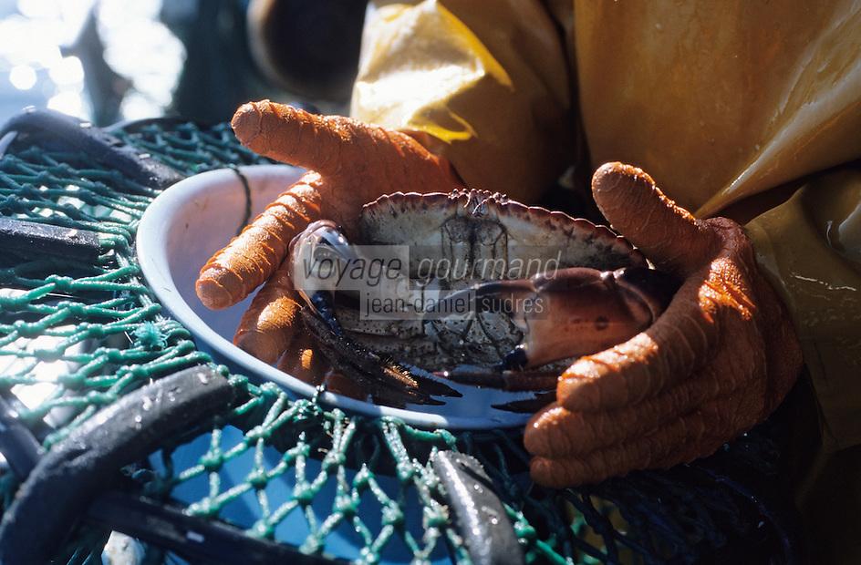 """Europe/France/Bretagne/29/Finistère/Saint-Guénolé: Pêche aux crustacés à bord du """"Galathée"""" - Homard et tourteaux"""