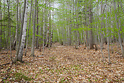 Site of the abandoned Civilian Conservation Corps camp in Hart's Location, New Hampshire. The Civilian Conservation Corps was a public work relief program that operated from 1933 to 1942 in the United States. Many of the construction projects they did during their existence benefit us today.