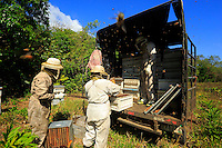The honey is quickly harvested and brought to the truck. The strident and nerve-wracking buzzing of the bees leaves the men in a daze, everyone is completely on edge.///Le miel est récolté et porté rapidement au véhicule. Le bruit strident et stressant des abeilles met les hommes en état second, les nerfs à vif.