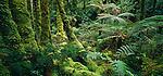 Rainforest in Breaksea Sound. Fiordland National Park. New Zealand.
