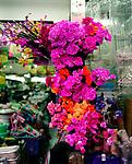 Flora, Plastikblumen, Geschaeft, Hongkong, China, 2003, Hong Kong Flora<br />  ***Keine Social_Media Nutzung***<br /> <br /> Engl.: Asia, China, Hong Kong, urban flora, plant, plastic flowers, shop<br /> ***No social media use***