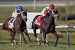 25 September 2010:  Rose Catherine (right),  Javier Castellano up, wins the Turf Amazon at Parx Racing, Philadelphia Park, Bensalem, PA. West Ocean, John Velazquez up, is second. (photo by Joan Fairman Kanes)