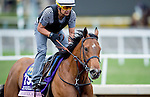 American Gal, owned by Kaleem Shah, Inc. and trained by Bob Baffert, exercises in preparation for the Breeders' Cup 14 Hands Winery Juvenile Fillies