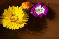 Flowers nepal