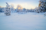Washington,Cheney, Turnbull Wildlife refuge. Animal tracks in the snow covered landscape with the setting sun.