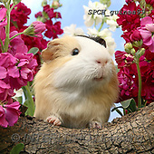 Xavier, ANIMALS, REALISTISCHE TIERE, ANIMALES REALISTICOS, photos+++++,SPCHGUINEA99,#A#, EVERYDAY ,funny