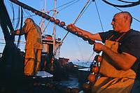 """Europe/France/Bretagne/56/Morbilhan/Quiberon: Pèche à la sardine sur le sardinier """"Kanedeven"""" [Non destiné à un usage publicitaire - Not intended for an advertising use]"""