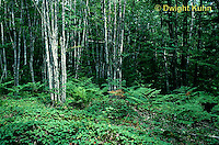 MT02-002a  Forest - summer, Acadia National Park, Maine