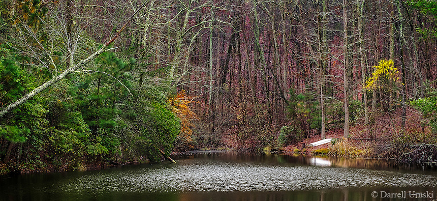 Art Photograph of a fall scene within a forest north of Atlanta Georgia. Within this fall scene are many colourful leaves that are scattered thorough-ought the forest. A small lake lies at the base of the forest that is located near the community of Hunters Ridge that is close to the town of Jasper.