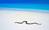 serpent tricot rayé, ilot Brosse