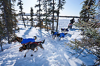 Lance Mackey pulls into the trees to park his team out of the breeze at the Cripple checkpoint 1/2 way into the race during the 2010 Iditarod