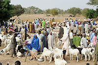 NIGER Zinder, villager sell cattle on the weekly market day in a village between Maradi and Zinder / NIGER Viehmarkt in einem Dorf zwischen Maradi und Zinder