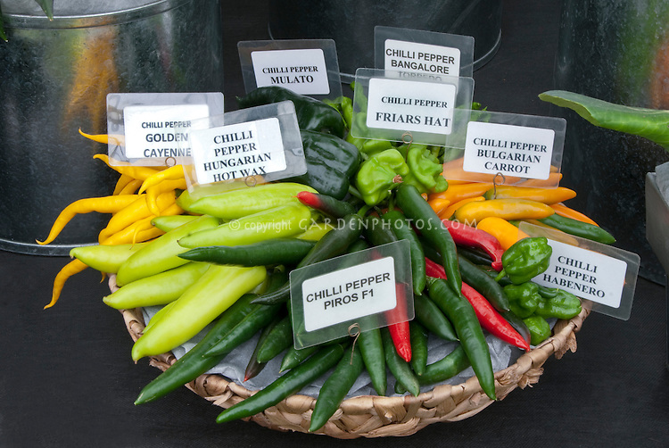 Many kinds of heirloom Chili Peppers together in basket with signs labeled