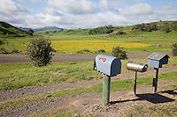 Rural Mail Boxes, near Opotiki, Bay of Plenty, north island, New Zealand.  Automobile Muffler being used as Mailbox.  Farmland, Cattle Grazing in Background.