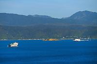 Bluebridge and Interislander ferries in Wellington, New Zealand on Thursday, 19 September 2019. Photo: Dave Lintott / lintottphoto.co.nz