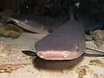 Two white tip sharks inside a cave at Molokini Maui Hawaii.