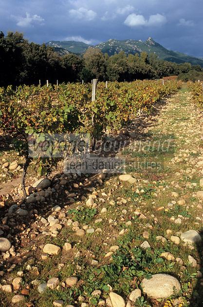 Europe/France/Corse/2A/Corse-du-Sud/env de Sartène/Vallée de l'Ortolu: Vignoble du domaine de cave vinicole de San Michele AOC Vin de Corse