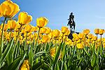 The George Washington statue by Thomas Ball and the tulip garden in the BostonPublic Garden, Boston, MA, USA