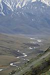 Dall sheep, Brooks Range, Arctic National Wildlife Refuge, Alaska