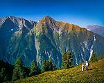 Oesterreich, Tirol, Zillertal, oberhalb Mayrhofen: Wandergebiet auf der Filzenalm mit Blick auf den Penken | Austria, Tyrol, Ziller Valley, above Mayrhofen: hiking region at Filzenalm alpine pasture, view at Penken mountain