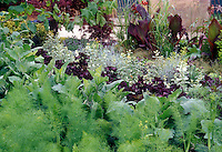 Fennel herb foliage at forefront of mixed garden bed of herbs, vegetables, flowers, tropical Canna foliage plants, grape vines