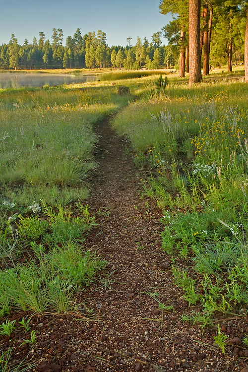 Path along White Horse Lake and ponderosa pines (Pinus ponderosa) in the Kaibab National Forest