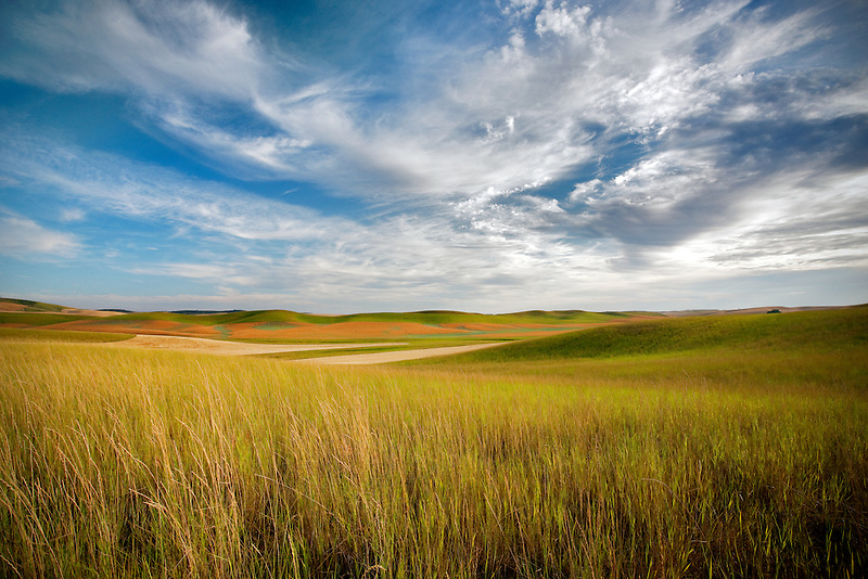 Foreground grass and farmland. The Palouse, Washington