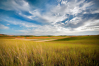 Foreground grass and farmland. The Palouse, Washington