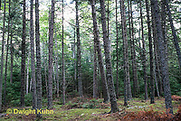 MT02-087a  Forest,  Acadia National Park, Maine