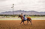 ARCADIA, CA - OCTOBER 30:Dortmund, owned by Kaleem Shah, Inc and trained by Bob Baffert, exercises in preparation for the Breeders' Cup Las Vegas Dirt Mile at Santa Anita Park on October 30, 2016 in Arcadia, California. (Photo by Alex Evers/Eclipse Sportswire/Getty Images)