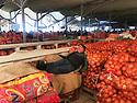 Uzbekistan - Tashkent - A trader sleeping on onion bags at the Chorsu Bazaar.