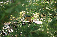 A member of the French Foreign Legion looks out from a position behind a hedge during a full scale multi-force exercise held at the airport of Tarbes, France, 11 December 2007.