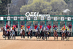 HOT SPRINGS, AR - MARCH 17: The start of the Rebel Stakes. Rebel Stakes at Oaklawn Park on March 17, 2018 in Hot Springs, Arkansas. (Photo by Ted McClenning/Eclipse Sportswire/Getty Images)