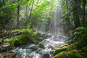 The sun breaks through the forest along the Ammonoosuc Ravine Trail in the White Mountains, New Hampshire USA during the summer months.