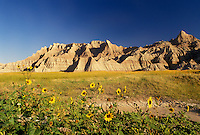 The Badlands, Badlands National Park, SD, South Dakota, Scenic view of rock formations with tall yellow sunflowers in the foreground in Badlands Nat'l Park in South Dakota.