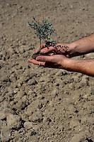 Un albero tra le mani a simboleggiare la tutela e protezione ambientale.A tree in his hands to symbolize the environmental protection...