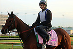 LOUISVILLE, KY - APRIL 25: Dream Dance (Afleet Alex x This Cat Can Dance, by Vindication) leaves the track after exercising in preparation for the Kentucky Oaks. Owner Stoneway Farm, trainer Neil J. Howard. (Photo by Mary M. Meek/Eclipse Sportswire/Getty Images)