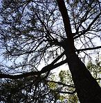 The Proper Trees