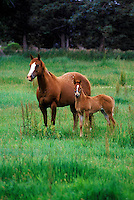 A MARE & COLT enjoy the green pastures of summer