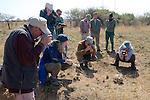 Earthwatchers with Leopard Tortoise